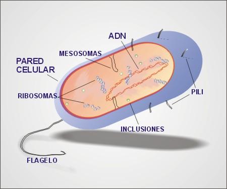 Evolución y Biomas - Monografias.com