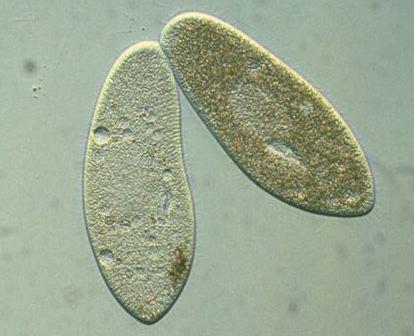 Los parásitos que viven en el cuerpo de la foto