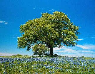 """""""Los árboles son esporofitos de plantas superiores"""""""