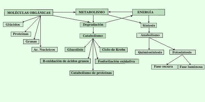 Mapa conceptual de fisiolog?a celular