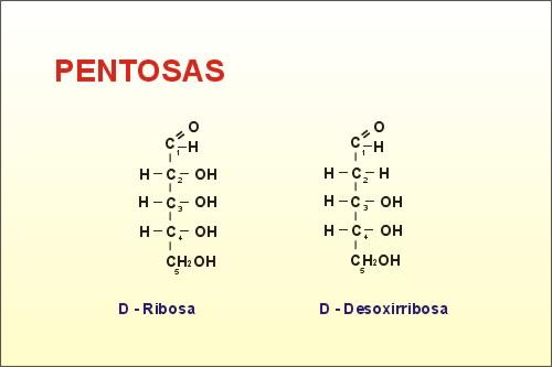 Monosacaridos Biologia 1