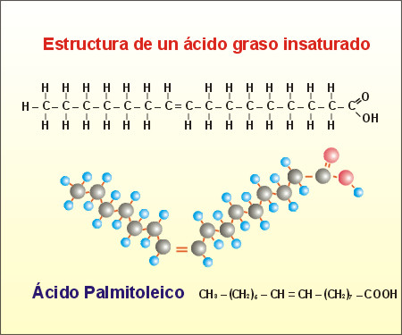 Formula General de Los Acidos Grasos Los ácidos Grasos