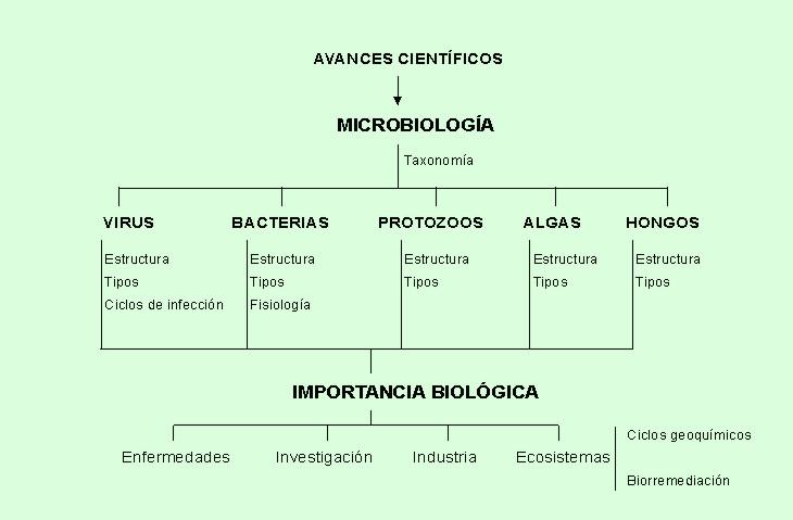 El micronúcleo se divide por meiosis, generando cuatro micronúcleos ...