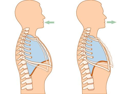 Circuito Respiratorio : Circuito respiratÓrio infantil u grupo sc medical