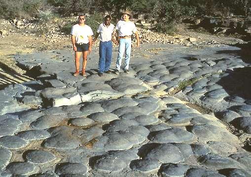 """Estromatolitos fósiles australianos de hace 2700 ma. Tomada de members.tripod.com/sedimentario/id4.htm."""