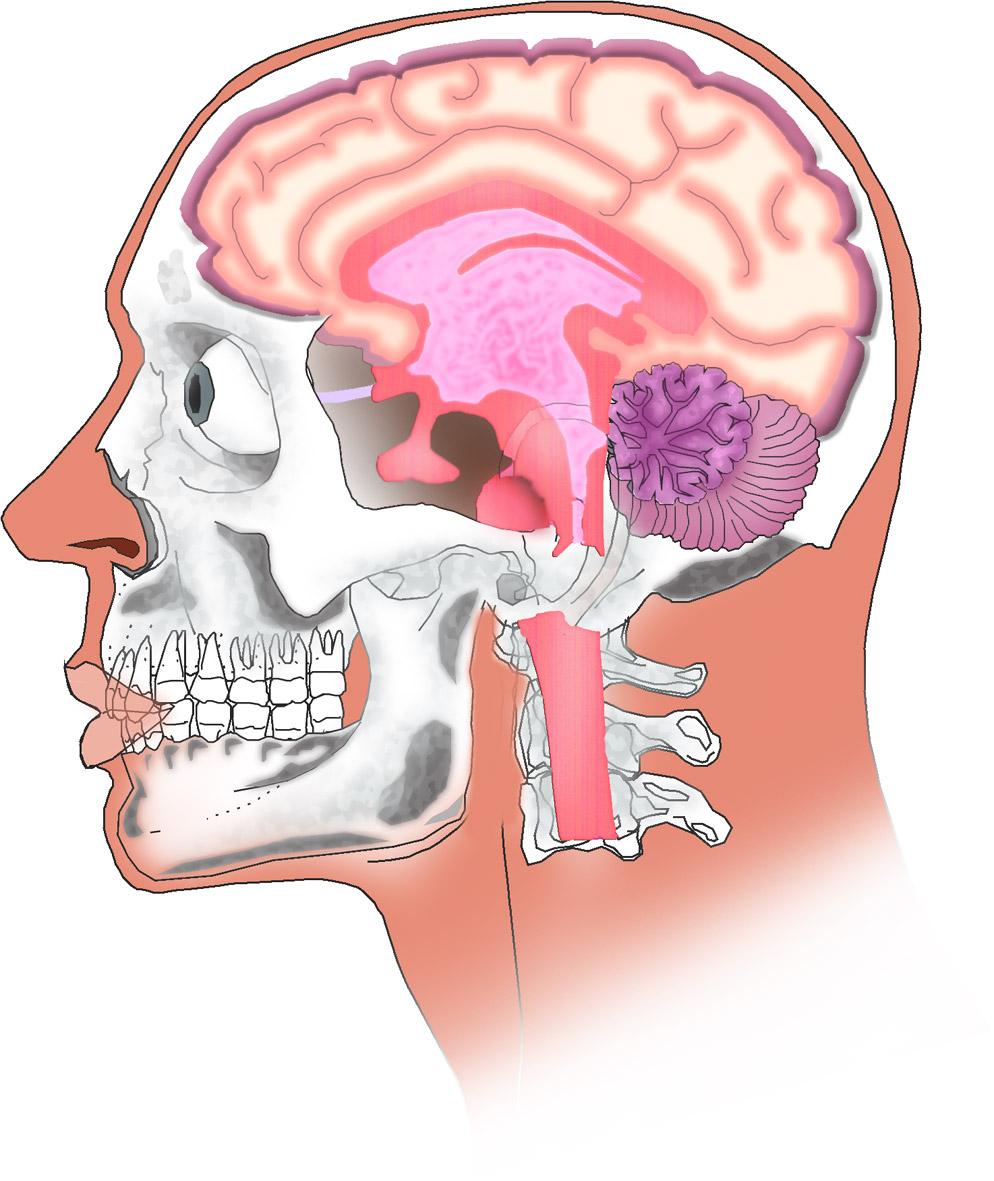 Vistoso Diagrama De La Cabeza Humana Modelo - Anatomía de Las ...